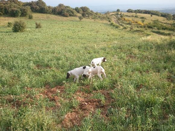 Elevage De La Roque Negre - eleveur de chiens Ariégeois